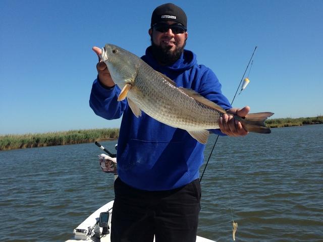 Venice inshore fishing charters gringo fishing for Venice la inshore fishing